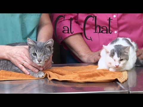 Cat Chat: Eye Enucleation