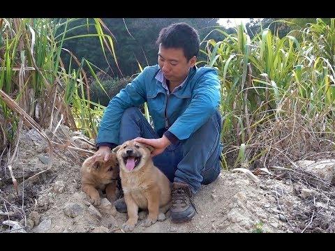 華農兄弟 現在竹鼠影片要低調了 改拍狗狗