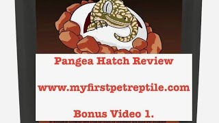 Pangea Hatch Review