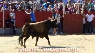 preview picture of video 'encierro y capea Velilla San Antonio 23 9 2013'