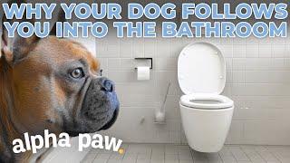 Why Your Dog Follows You Into The Bathroom