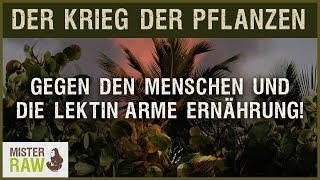 Der Krieg der Pflanzen gegen den Menschen und die Lektin arme Ernährung.