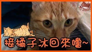 【巧克力】『橘子冰的日常』- 接橘子冰回家嚕 ฅ•ω•ฅ