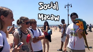 Rachel Blue and Gold Macaw - Parrot Meets Strangers in Coney Island