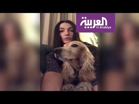 العرب اليوم - شاهد: نجوم مصر يطلقون حملة دفاعا عن الحيوانات الأليفة ضد