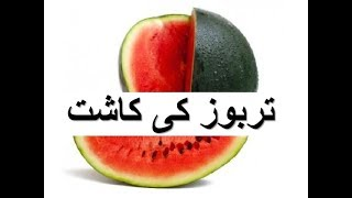 Tarbooz Ki Kasht - Watermelon Production Technology- تربوز کی کاشت