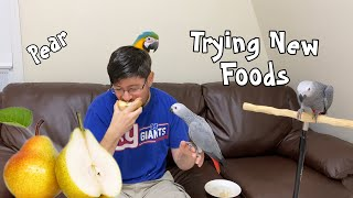 Baby Parrots Try a New Food!
