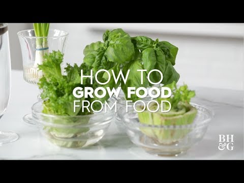 How To Grow Food From Food   Basics   Better Homes & Gardens
