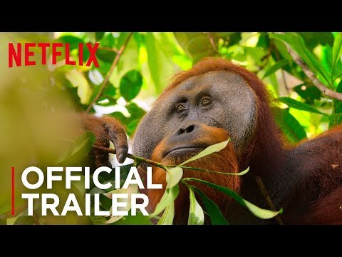 Our Planet Trailer with Sir David Attenborough
