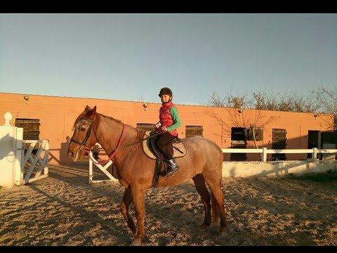 Первый урок верховой езды 🏇 .Любителям лошадей 🐎