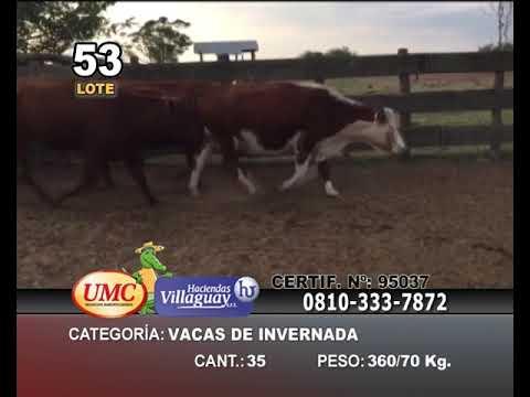 Lote 35 Vacas de invernar en Col. Sta Rosa, Corrientes