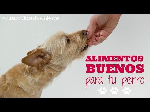 Alimentos buenos para perros