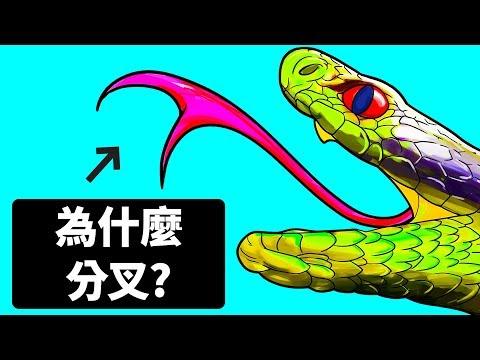 蛇的舌頭~