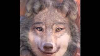 Woman to Wolf Morph