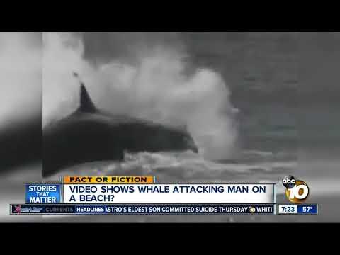 KILLER WHALES EAT MAN ON BEACH - billschannel - Video - 4Gswap org