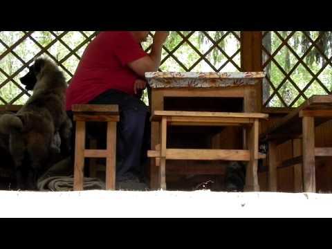 Как сделать амулет дерево жизни своими руками