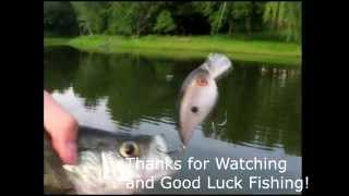Pond Fishing For Bass, Crappie, Bluegill Using Spinner lures and Crankbaits