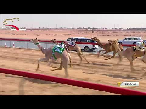 مهرجان ختامي المرموم- حقاقة للشيوخ 1-4-2018 م- ش3 شهلوله لـ هجن النايفات - سعيد هديبان المري 6:01:8