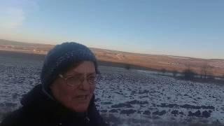 Мороз и солнце! ЛЕС - чудесный!!! - Влог)))