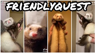 Ferret Dancing | TikTok Compilation #4 From @friendlyquest
