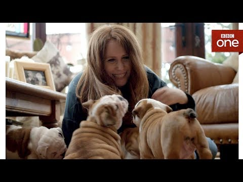 Can surgery help Betsy the Bulldog with her breathing? - Saving the British Bulldog - BBC One