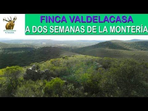 Finca Valdelacasa - A dos semanas de la Montería - Extremadura Caza