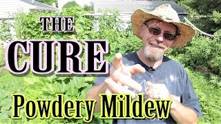 The BEST Way to Stop Powdery Mildew
