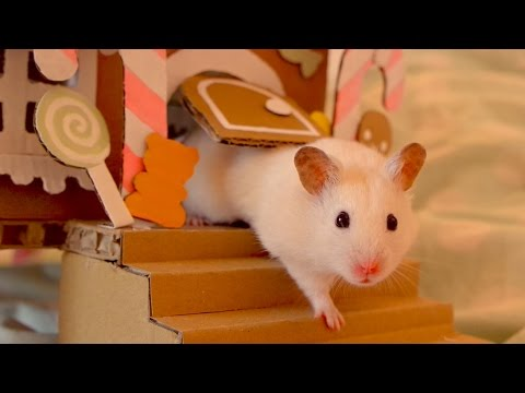 🍬 Hamster in a Gingerbread House 🍭