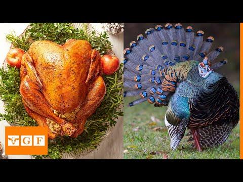 , title : 'Top 10 Best Turkey Breeds