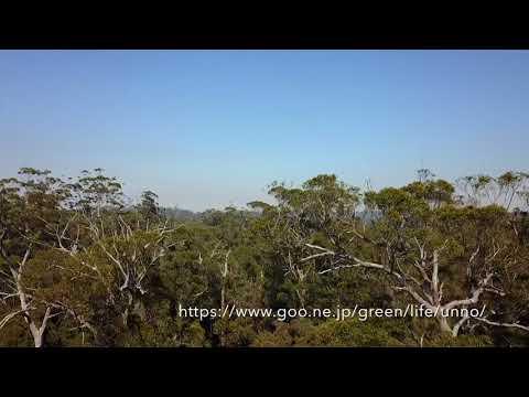 カリの森をMavic proで撮影 Karri Forest