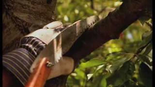 How To Prune Trees In The Summer