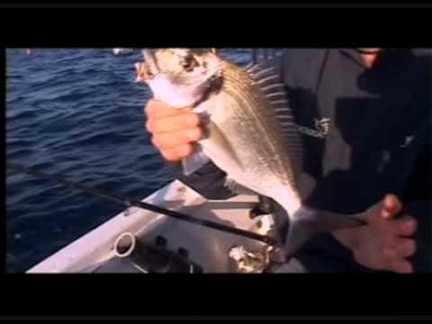 Attori del film di caratteristica di pesca nazionale adesso