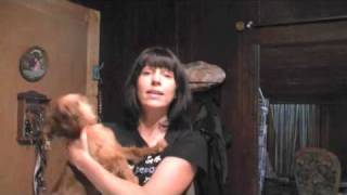 Education canine: Prévenir les aboiements