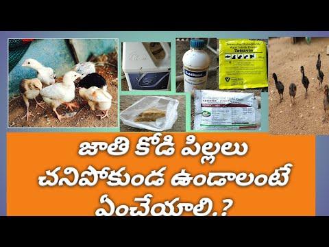, title : 'Natukollo Chicks vaccine and powder How to use