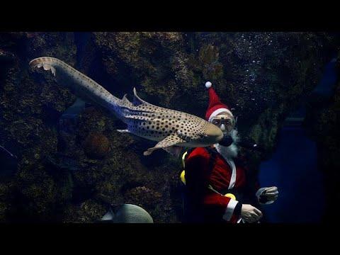 العرب اليوم - شاهد: زيارة لسانتا كلوز داخل حوض للأسماك في متحف مالطا الوطني