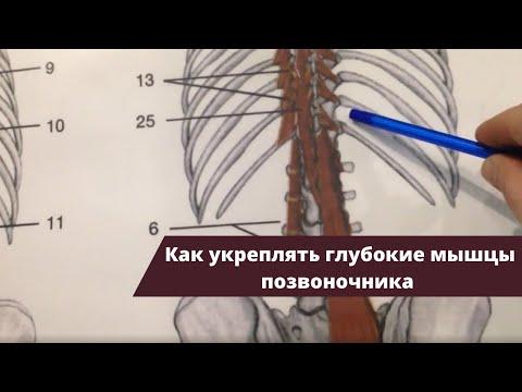 Ортопедические подушки при остеохондрозе поясничного