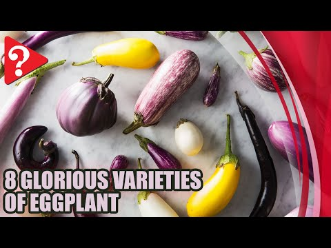 , title : 'A Visual Guide to 8 Glorious Varieties of Eggplant