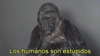 Este Gorila Habló y NO Creerás el Mensaje que Reveló