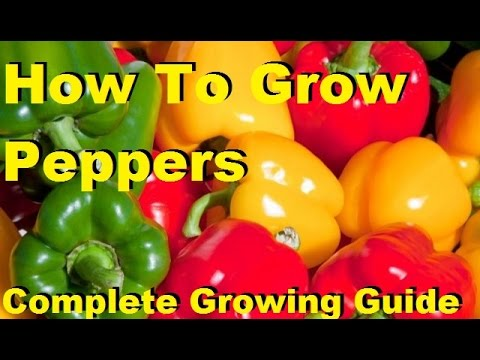 , title : 'How To Grow Peppers - Complete Growing Guide