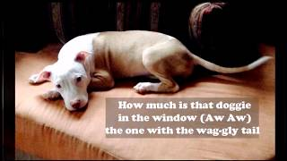 HOW MUCH IS THAT DOGGIE in the window PATTI PAGE with lyrics
