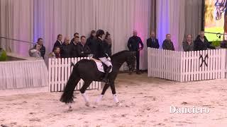 Video von Danciero