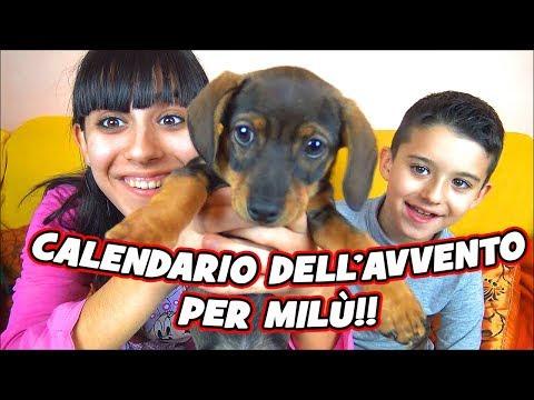 UN CALENDARIO DELL'AVVENTO...  PER MILÙ!! - Tina & Pippo Review