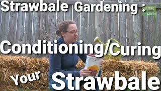 Straw Bale Gardening Start to Finish - Conditioning/Curing your Straw Bale