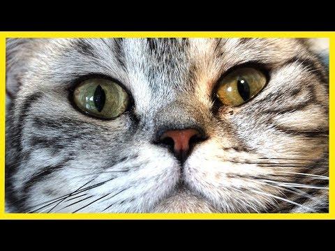 Najzlatšie mačičky!