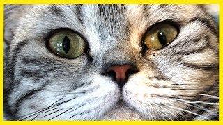 mokré mačička pic HD