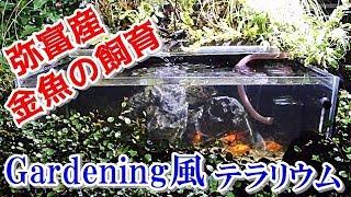 屋外ガラス金魚水槽花壇の中の弥富産金魚/Gardening風テラリウム