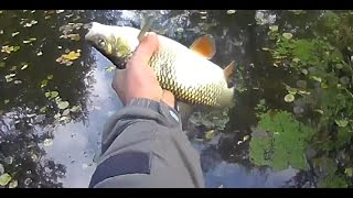 Смотреть онлайн Приятная рыбалка ради интереса на маленькой речушке