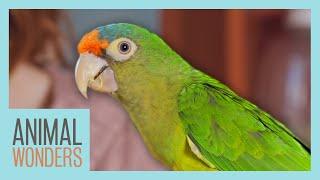 Parrot Care Basics   Compilation