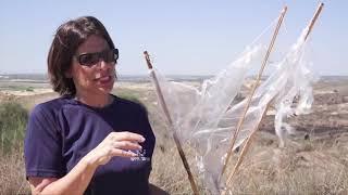 Fokus Jeruzalém 067: Noví hlídači: Dobrovolníci hlásí požáry na hranici s Gazou