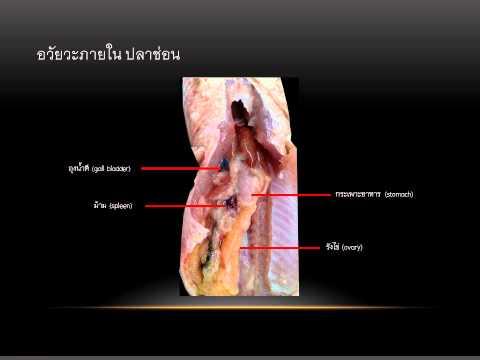 ที่คุณสามารถตรวจสอบการปรากฏตัวของปรสิตในร่างกายมนุษย์